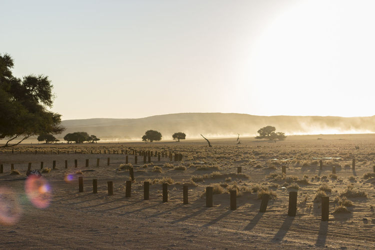 Clear Sky Day Landscape Mammal Namibia Namibia Desert Namibia Landscape NamibiaPhotography Nature No People Outdoors Sky Sunset Tree