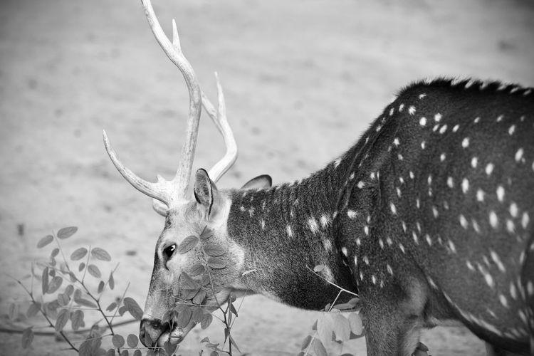 Fotografia scattata allo Zoo di Lignano Sabbiadoro - Parco zoo Punta Verde 2010 Animali Natural Beauty Nature Photography Animals Italia Lignano Sabbiadoro Friuli Venezia Giulia Fotografia Naturalistica Fauna Fauna_collection