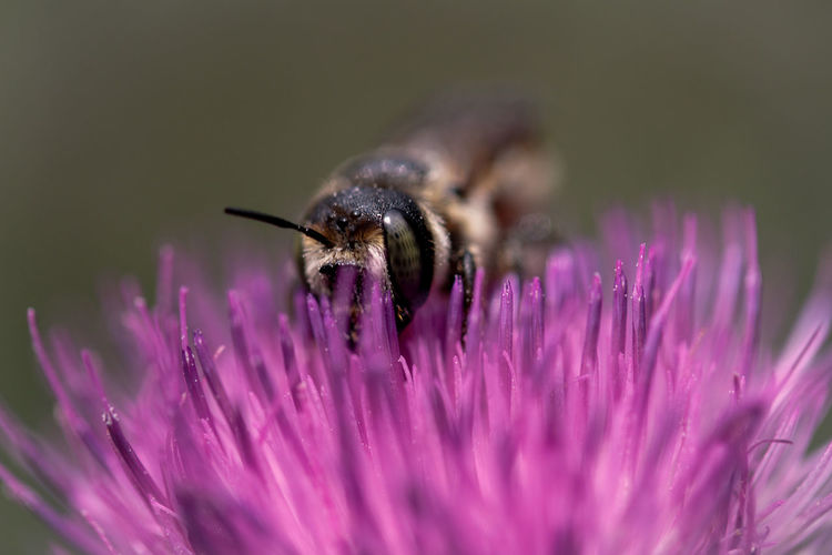 Flower Flowering Plant Insect Animal Beauty In Nature Fragility One Animal Animal Wildlife Animal Themes Animals In The Wild Invertebrate Vulnerability  Petal Close-up Purple Plant Freshness Flower Head Bee Nature No People Pollination