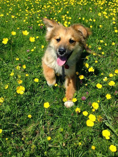 Portrait of dog on flower plants