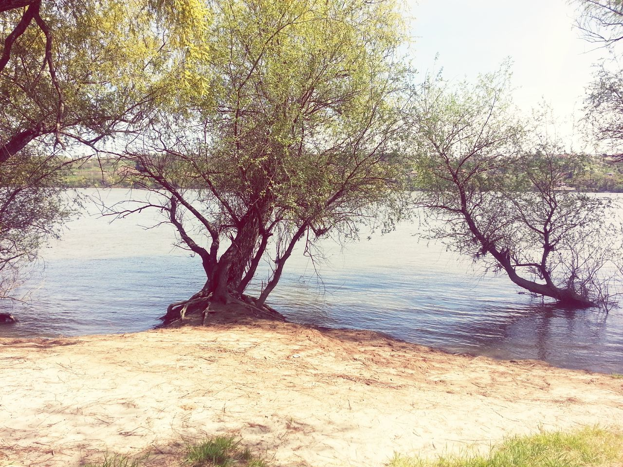 tree, water, nature, beauty in nature, tranquility, scenics, tranquil scene, lake, no people, growth, outdoors, branch, day, sky