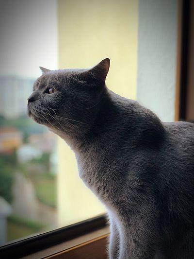 Cat Animal One