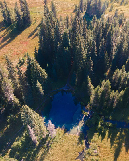 Little crater lake, or Beauty In Nature Coniferous Tree Day Environment Forest Growth High Angle View Idyllic Land Landscape Mountain Nature No People Non-urban Scene Outdoors Pine Tree Pine Woodland Plant Scenics - Nature Sunlight Tranquil Scene Tranquility Tree