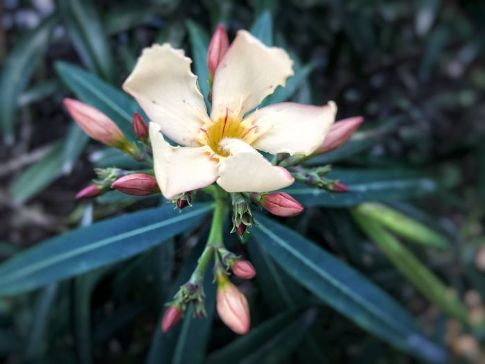 Flower Fragility Growth Petal Nature Flower Head Beauty In Nature Outdoors Day Close-up No People Plant