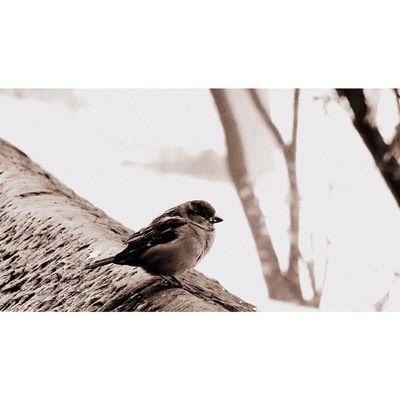 Newyork Newyorkcity NYC Sony Sonyhx50 HX50 Snow Bird Tree Wildlife