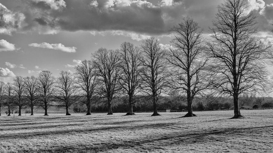 Line of trees converted to black and white Tree Line Line Of Trees Trees Tree Sky Bare Tree Cloud - Sky Nature Field Beauty In Nature Scenics - Nature Landscape Treelined Black And White Black And White Landscape Winter Winter Landscape Bare Trees Trees In Winter Tree Shadows
