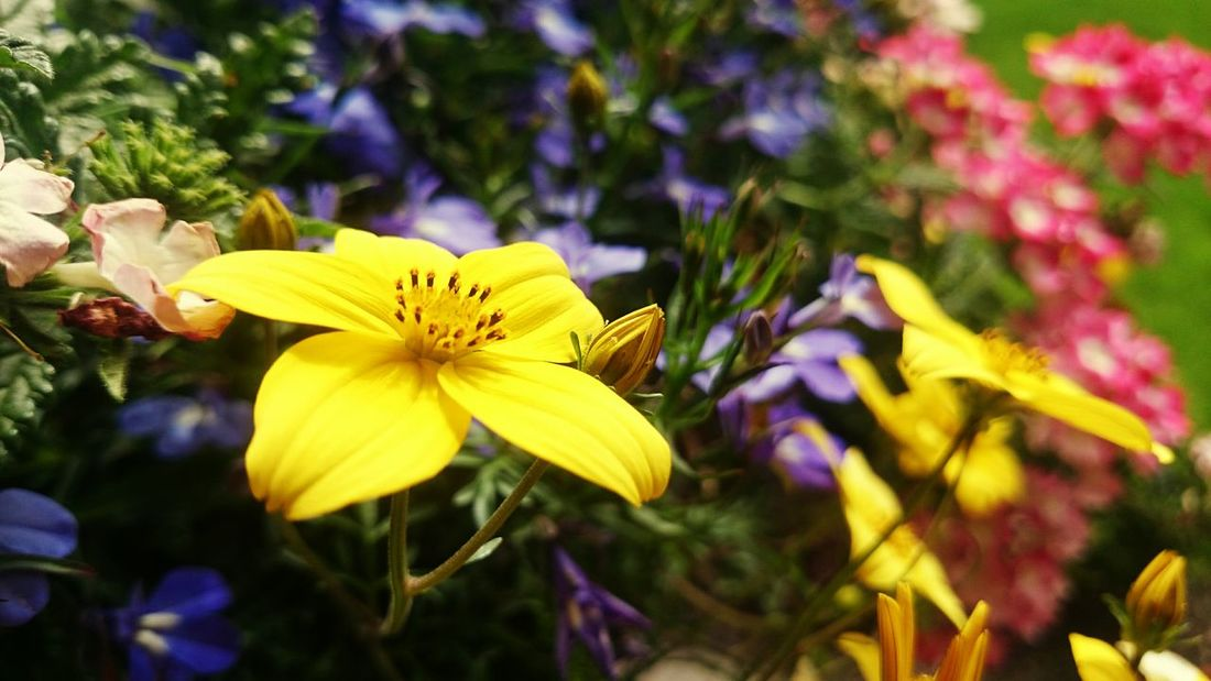 Sony Z2 Photography Flower Spring Has Arrived Spring 2016