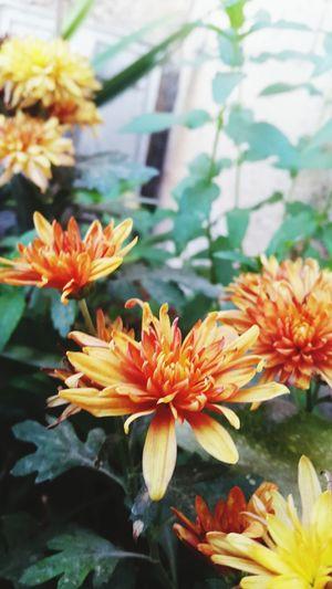 Orange Flower Small Flower 🌷 Flowers 🌹 Beautiful Flowers 🌸 🌸~ Beautiful Nature Collection Nature Photography Nature Beautiful Nature 🌸Nature🌸 ❤❤