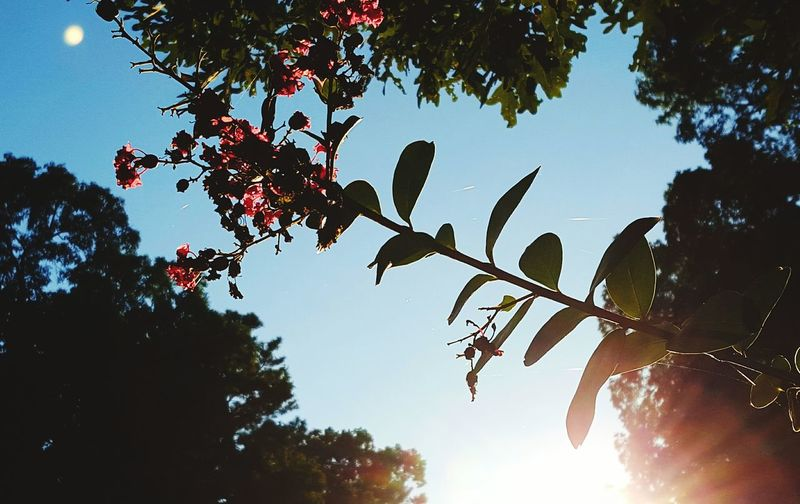Silouette & Sky EyeEm Nature Lover Shadows And Light Sun Rays Flower Porn