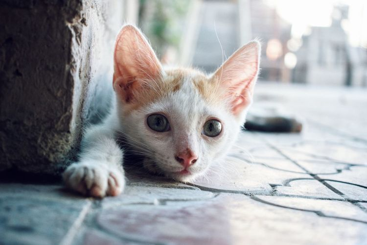 super 🐈 Kitty Cat Pets Portrait Domestic Cat Looking At Camera Feline Close-up Kitten Ginger Cat Tabby Cat Young Animal Tabby Pet Bed Stray Animal