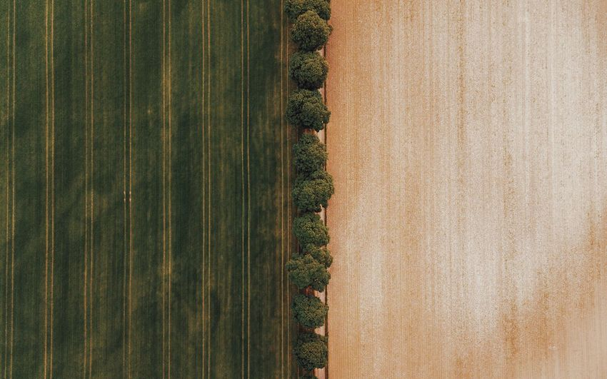 – PARADE – Check This Out DJIxEyeEm Dronephotography Agriculture Drone  From Above  Rural Scene Plant Agriculture Landscape Land No People Day Growth Nature Field Environment Farm Tranquil Scene Green Color Beauty In Nature Scenics - Nature Tranquility Crop  Outdoors Full Frame The Great Outdoors - 2018 EyeEm Awards