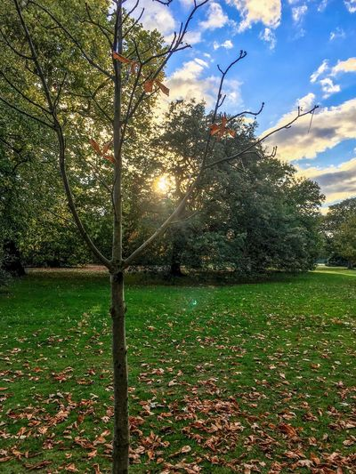 November Season  November Winter Transitional Moments London Transition Transition Transition Transient Plant Tree Sky Nature Growth Green Color Grass Cloud - Sky Leaf Beauty In Nature No People Sunlight Day Outdoors Park Field Land Park - Man Made Space Sunset Sport