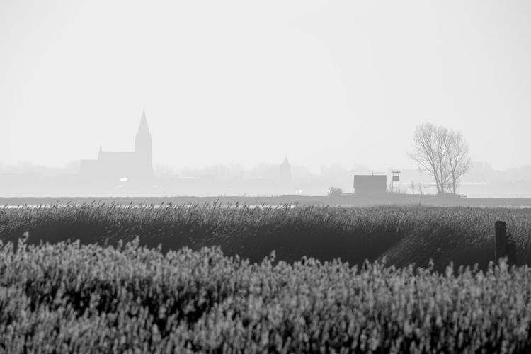 Darß, January 2016 Baltic Sea Black & White Black And White Blackandwhite Church Cold Darß Fog Foggy Morning Germany House Ice Kirche Landscape Schwarz & Weiß Schwarzweiß Sea Tree Wide Winter Wintertime Zingst