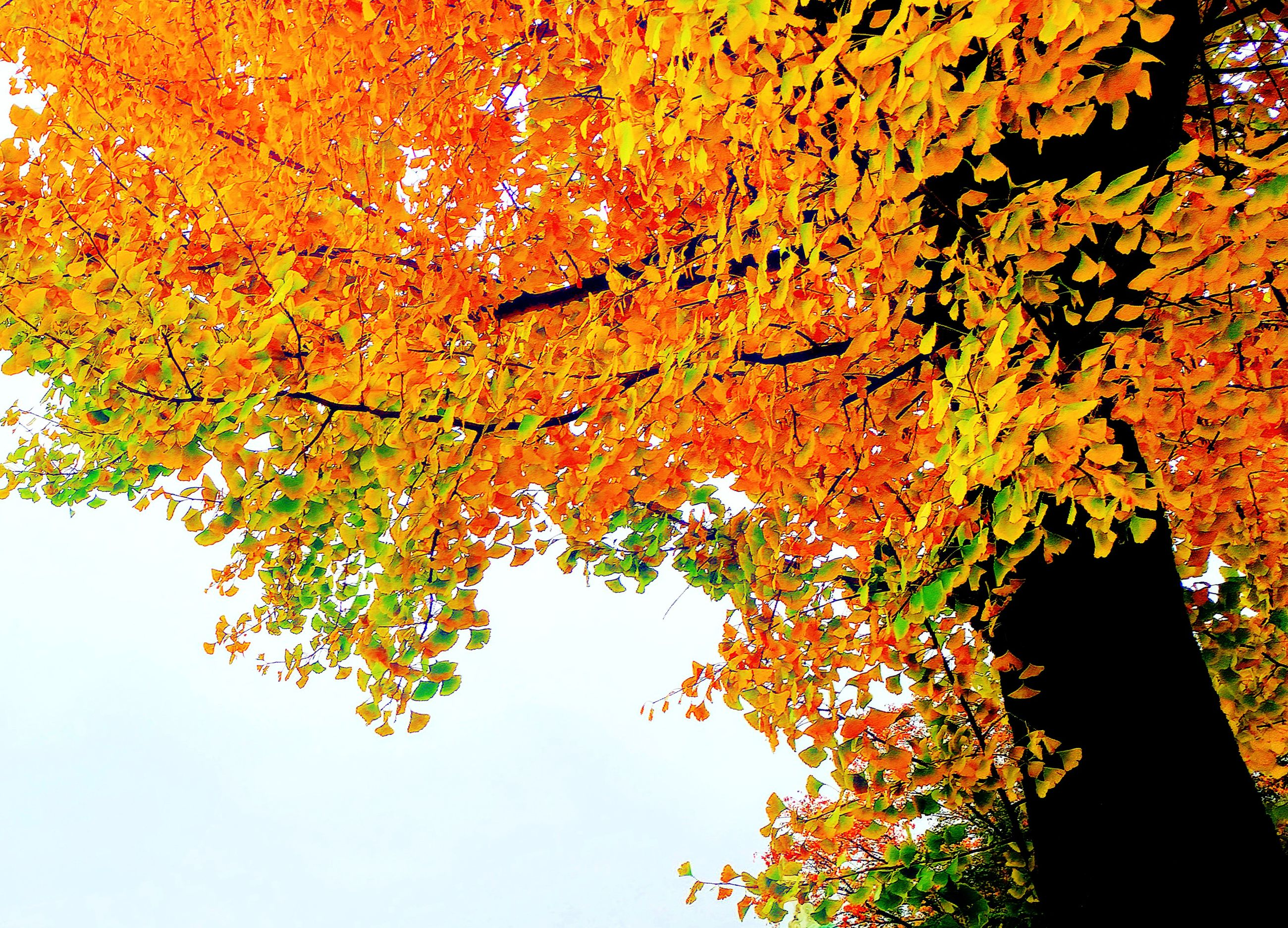 orange color, tree, change, autumn, nature, growth, leaf, beauty in nature, branch, no people, yellow, multi colored, day, close-up, sky, fragility, backgrounds, outdoors, maple leaf, maple