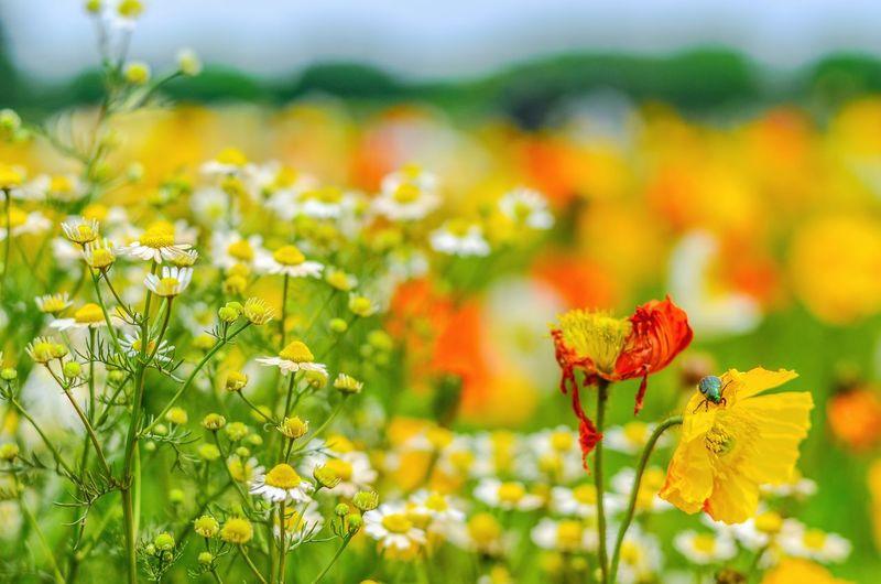 Nikonphotography Flowers Nature Park