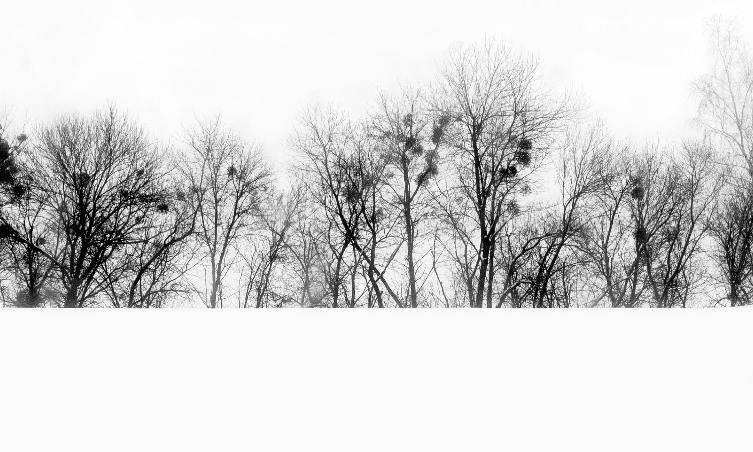 bare tree, clear sky, tree, tranquility, winter, tranquil scene, cold temperature, copy space, nature, snow, beauty in nature, branch, scenics, low angle view, weather, outdoors, sky, day, no people, landscape