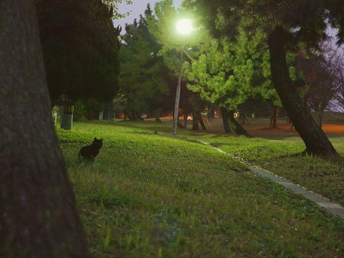 The Following Cat BLackCat Night Nightphotography Night View Beautiful Park 猫 黒猫