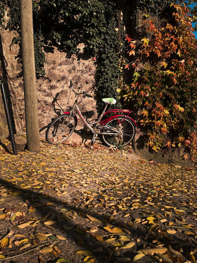 Bicycle parked by tree during autumn