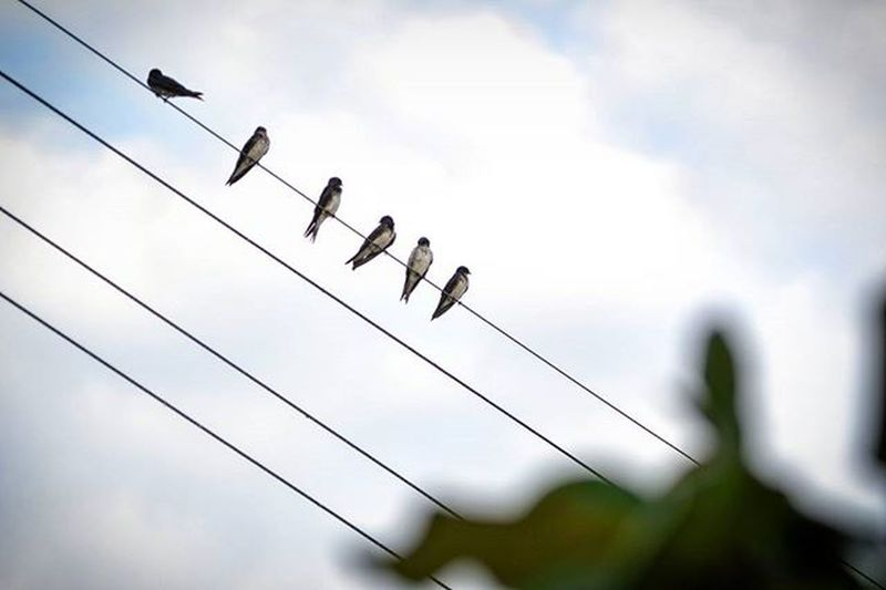 Mais registros de Ilha Grande! Birds in line! The greatest view! Birds Ilhagranderj Ilhagrandebr Passaros Fiodealtatensão Curtindoavista Thegreateastview Velharianãopara Velhariaskateboard