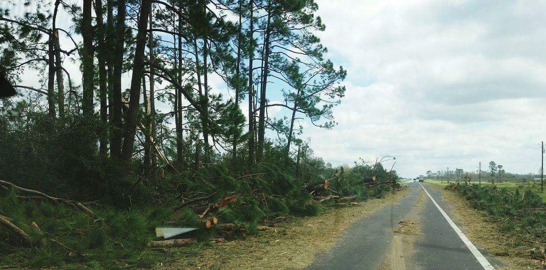 • Hurricane Michael • Fallen Tree Georgia Hurricane Michael 2018 Hurricane Damage Destruction Nature Extreme Weather Storm Damage Wind Damage Hurricane Road Sky Hurricane - Storm