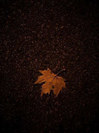 Leaf Leafs Photography Leaf Spring Nature Outdoors No People Night Pavement Madrid Wildlife & Nature Eyem Best Shots EyeEmBestPics EyeEm Best Shots EyeEm Nature Lover Street Street Photography Street Photo Asphalt Street Pavement Roadway Paving