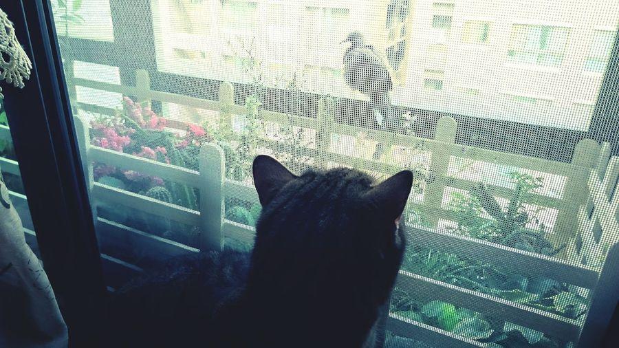 窗外有朋友來訪耶!咦 ねこ かわいい Cute♡ Cute Cats Pet Kawai Cat 貓 Cat♡ Tori