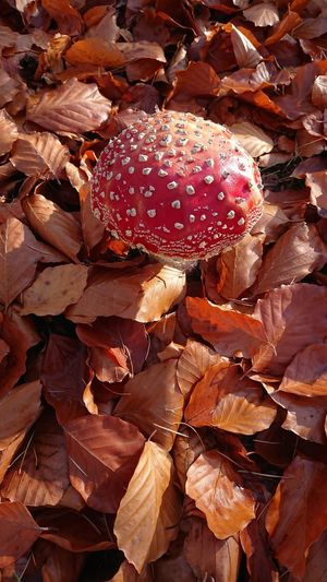 High angle view of mushroom on field during autumn