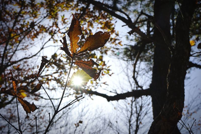 Nature Low Angle View Tree Branch Leaf Autumn Animals In The Wild One Animal No People Bird Animal Wildlife Animal Themes Day Outdoors Perching Sky Mountain Nature_collection Light And Shadow Silhouette Beauty In Nature EyeEm Best Shots EyeEmBestPics Photoshoot 登山