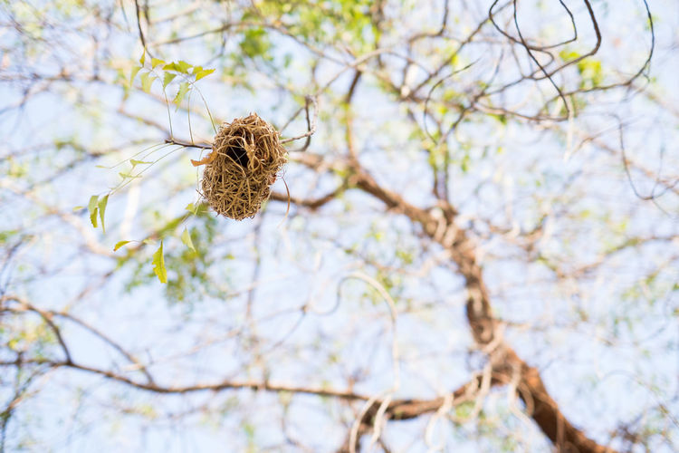 Animal Wildlife Animals In The Wild Birds Branch Day Low Angle View Nature Nest Outdoors Sky Sunlight Tree Focus Object