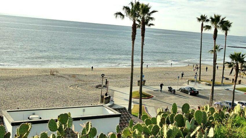 Beach Life Is A Beach Trees Nature Laguna Beach Water