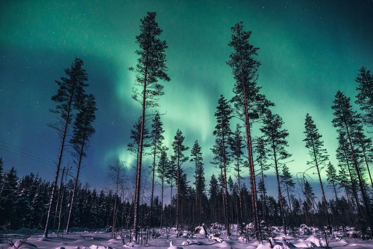 View to north Tree Sky Tranquility Tranquil Scene Beauty In Nature Nature Winter Snow Cold Temperature No People Forest Night Outdoors WoodLand Pine Tree Landscape Scenics Hello World Hanging Out Taking Photos Aurora Borealis Northern Lights Lapland Travel Clear Sky