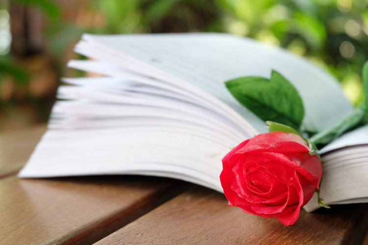 red rose in the book Close-up Day Freshness Green Color Leaf Nature No People Outdoors Red Table