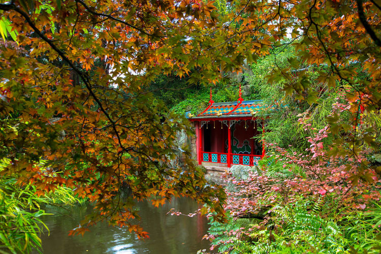 Japanese garden Japanese  Architecture Autumn Autumn Collection Beauty In Nature Built Structure Change Day Forest Growth Lake Leaf Nature No People Outdoors Plant Plant Part Reflection Tranquility Tree Water