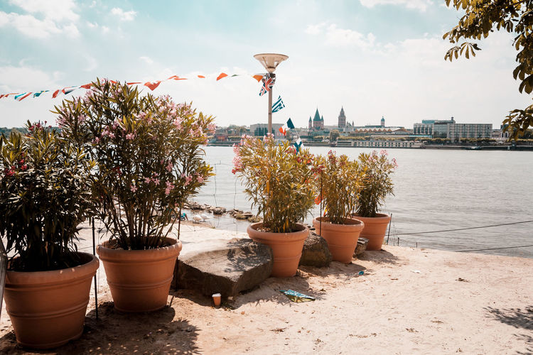 Potted plants by river rhine