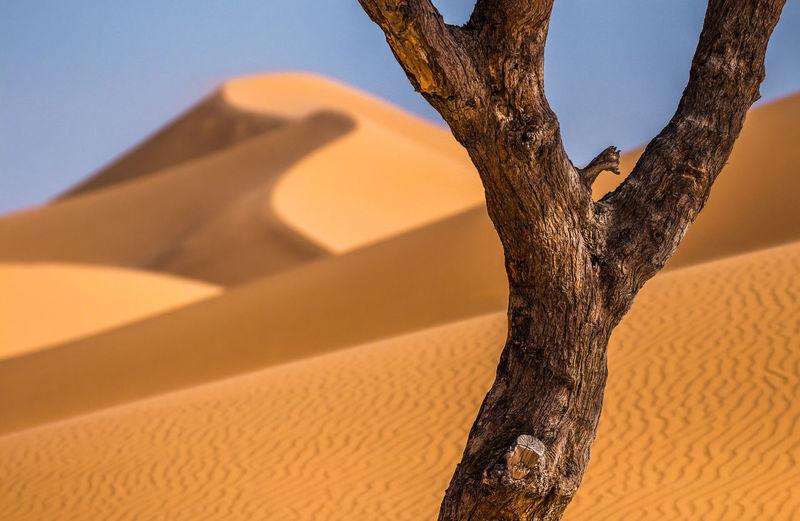 desert defocus Sand Dune Desert Sand Arid Climate Sky Close-up