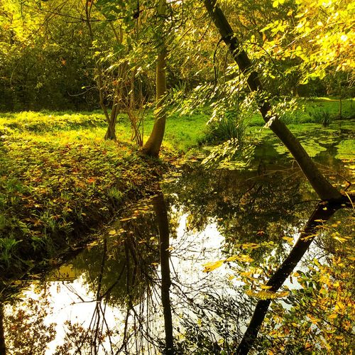 Tree Nature Tranquil Scene Tranquility Beauty In Nature Reflection Branch Growth Scenics Outdoors Lake No People Sunlight Day Green Color Forest Water Autumn Leaf Neukölln Rudow Berlin Photography Berliner Ansichten Berlin
