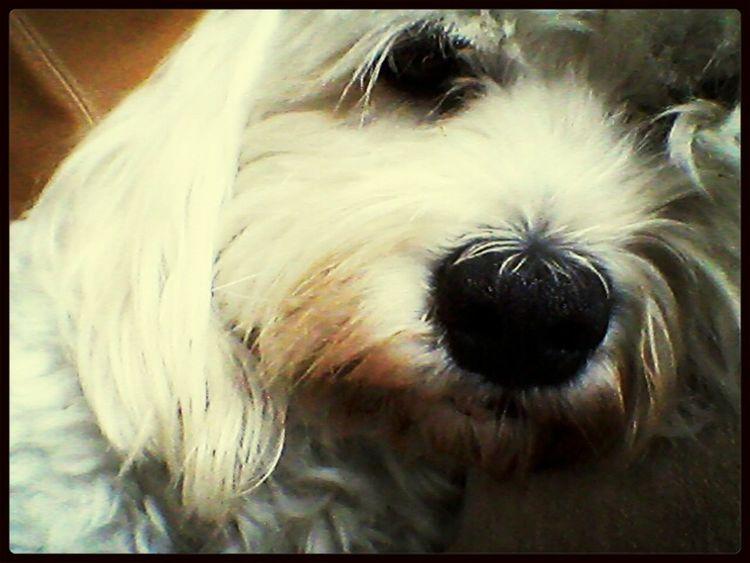 love my doggie Cute