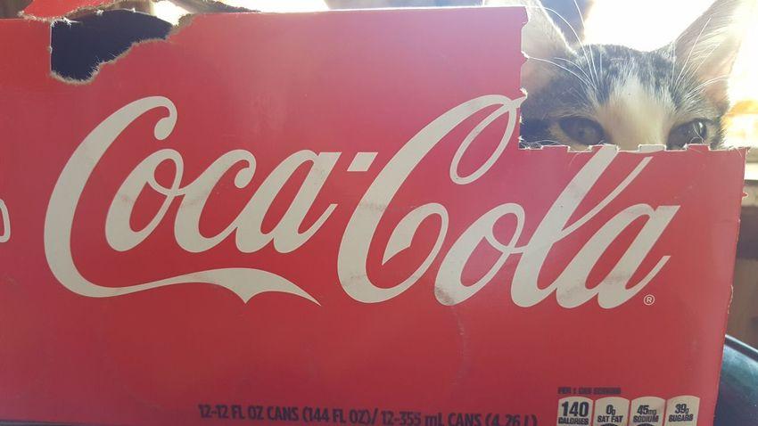 Close-up Coca-Cola ❤ Cat Lovers Coca-Cola, Label/logo/sign