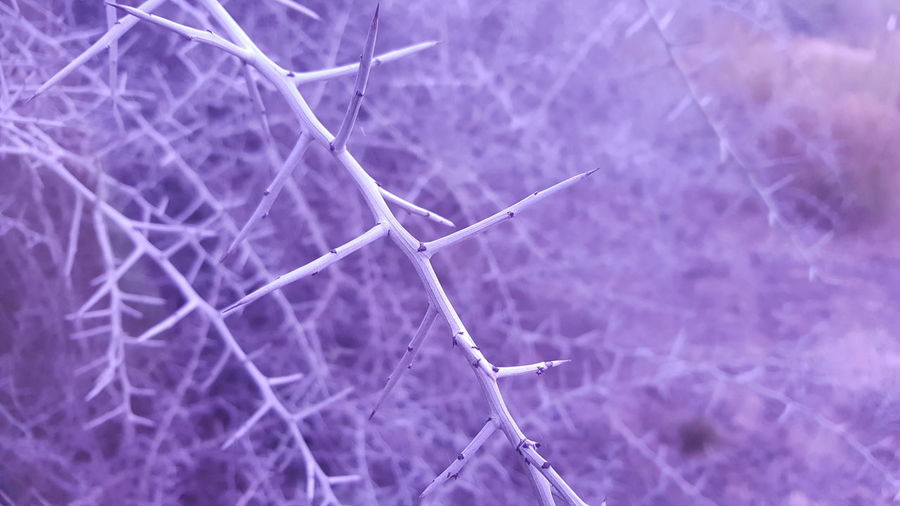 Nature Close-up Tree Thorns And Beauty Aesthetic Thorns Aesthetic Purple Winter Wonderland Beauty In Nature Camera Filter Nature Asthetic Purple Meaningful  No People Outdoors Day Bokeh My Point Of View Mood Captures Tumbler Aesthetic