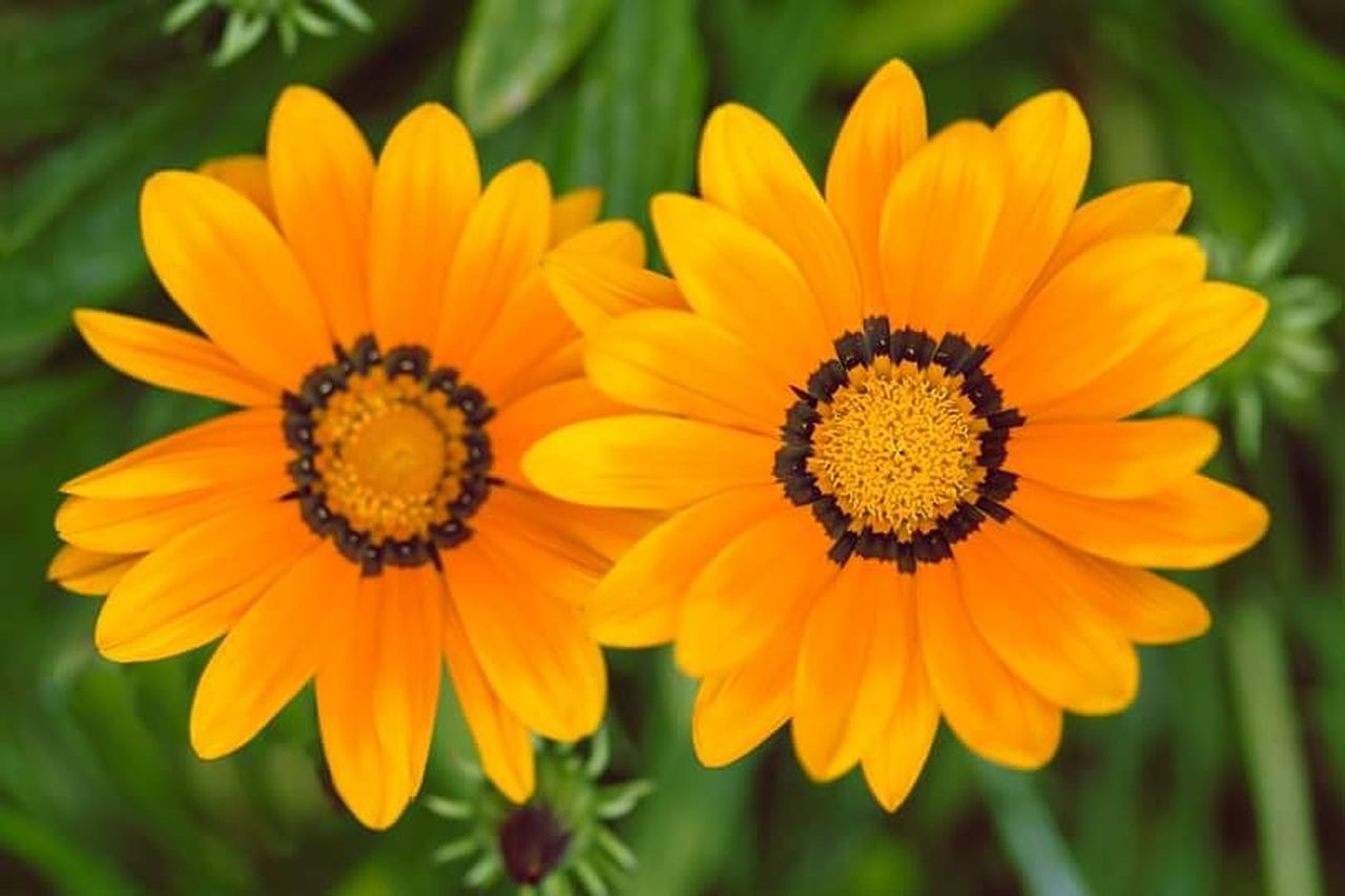 CLOSE-UP OF FRESH YELLOW FLOWER