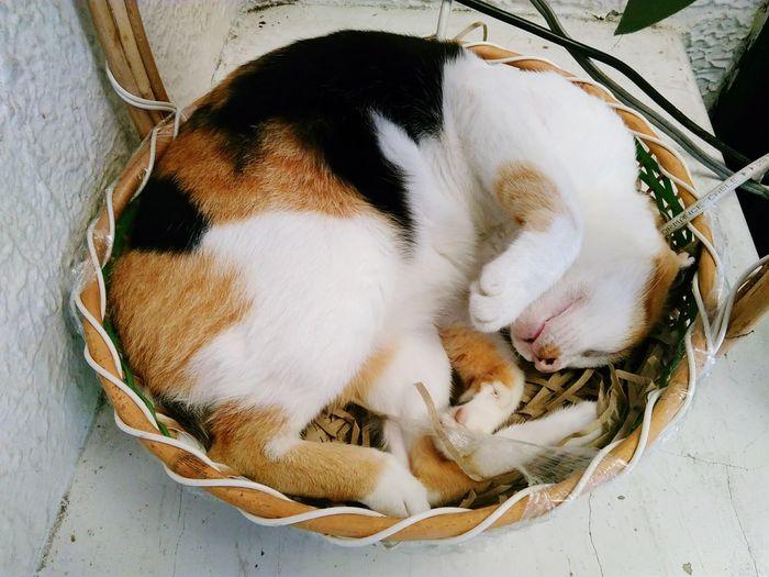 Cat Animal Domestic Animals Pets Sleep
