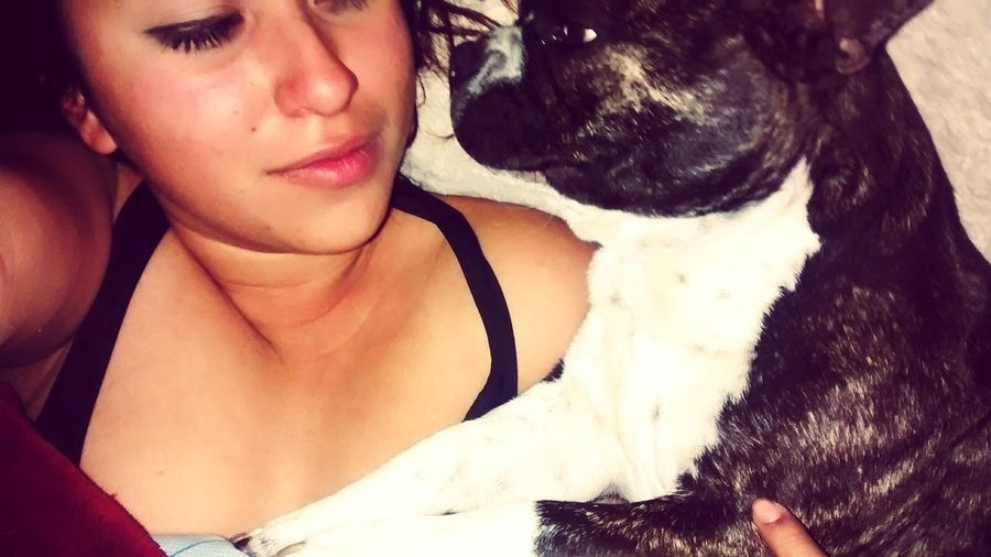 My French Bulldog <3 French Bulldog Goodmorning I Love My Dog