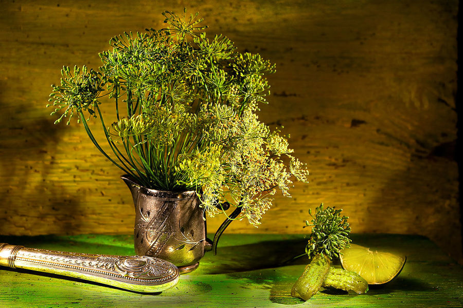 Herb Herbs Vintage Kitvhen Nostalgia Wood Table Plant Country Life Dill Dill Seeds