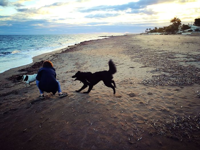 Animal Themes Beach Beauty In Nature Cloud - Sky Day Dog Domestic Animals Horizon Over Water Mammal Nature One Animal One Person Outdoors Pets Real People Sand Scenics Sea Sky Two Dogs Two Dos Water What Who Where