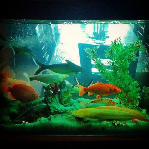 Myaquarium Catfish Carp Parrotfish Whiteshark Nexus5photography Fishlover