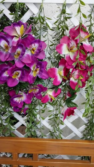 Flower Plant Pink Color Close-up Indoors  Day Freshness Growth No People Nature Wood - Material Green Color White Color Beauty In Nature Backgrounds Freshness Leaf Hanging Purpleflower Pink Flower White Background Nature Fresh