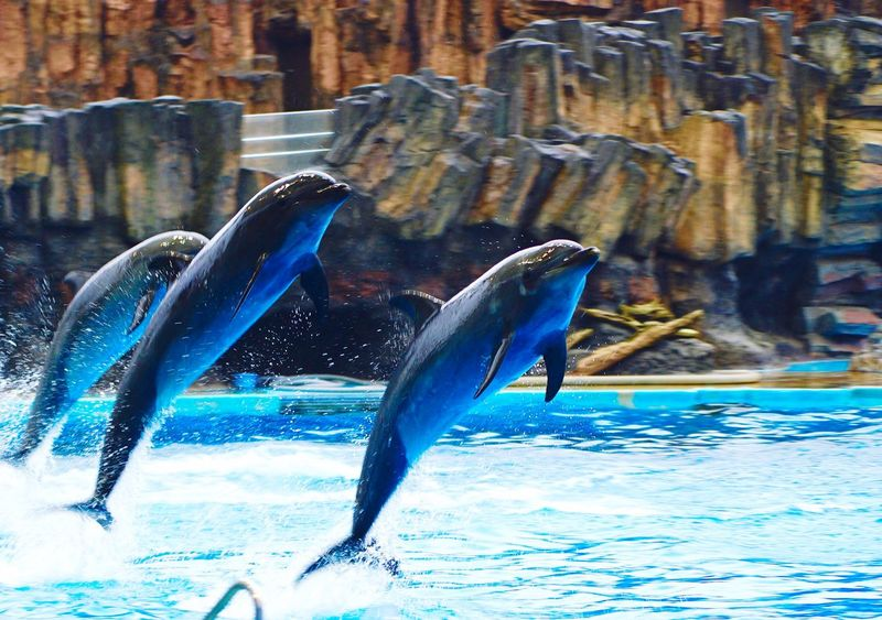 Dolphins DolphinShow Dolphin 名古屋港水族館