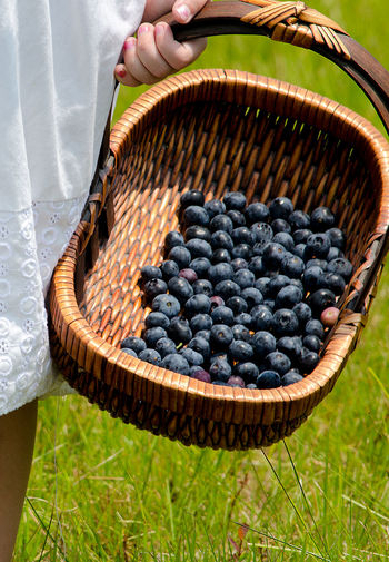 a little girl holds a basket of jsut picked blueberries Check This Out Nature Agriculture Basket Blueberries Close-up Day Food Food And Drink Freshness Fruit Fruits Healthy Eating Healthy Lifestyle High Angle View Holding Lifestyles Little Girl Nature One Person Organic Outdoors People Real People Straw Basket