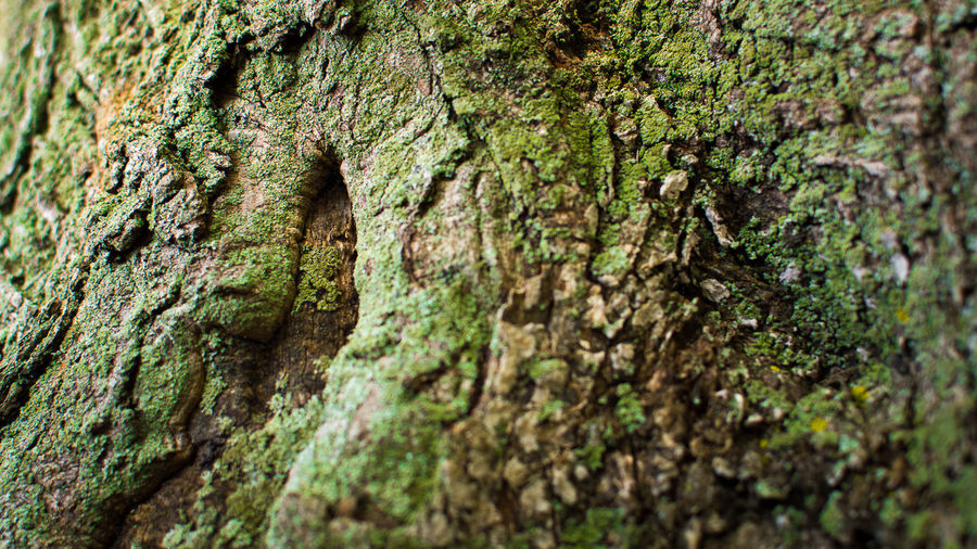 Tree Skin Nature On Your Doorstep EyeEm Best Shots EyeEm Nature Lover Nature Photography Nature Nature_collection Trees EyeEm Best Shots - Nature Fineart Photographed at Colt State Park, Bristol RI The Great Outdoors With Adobe