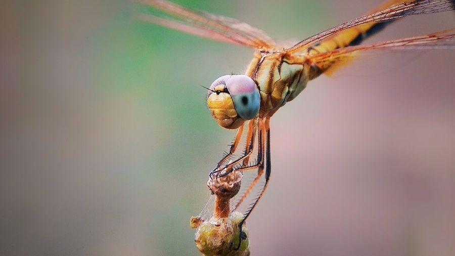 Macro World Insect Macro Insects  Macro Photography #Dragonfly #insectslovers #macrolovers #macrolens #dpphotography